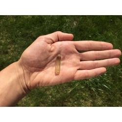 Pendentif / pendule en citrine